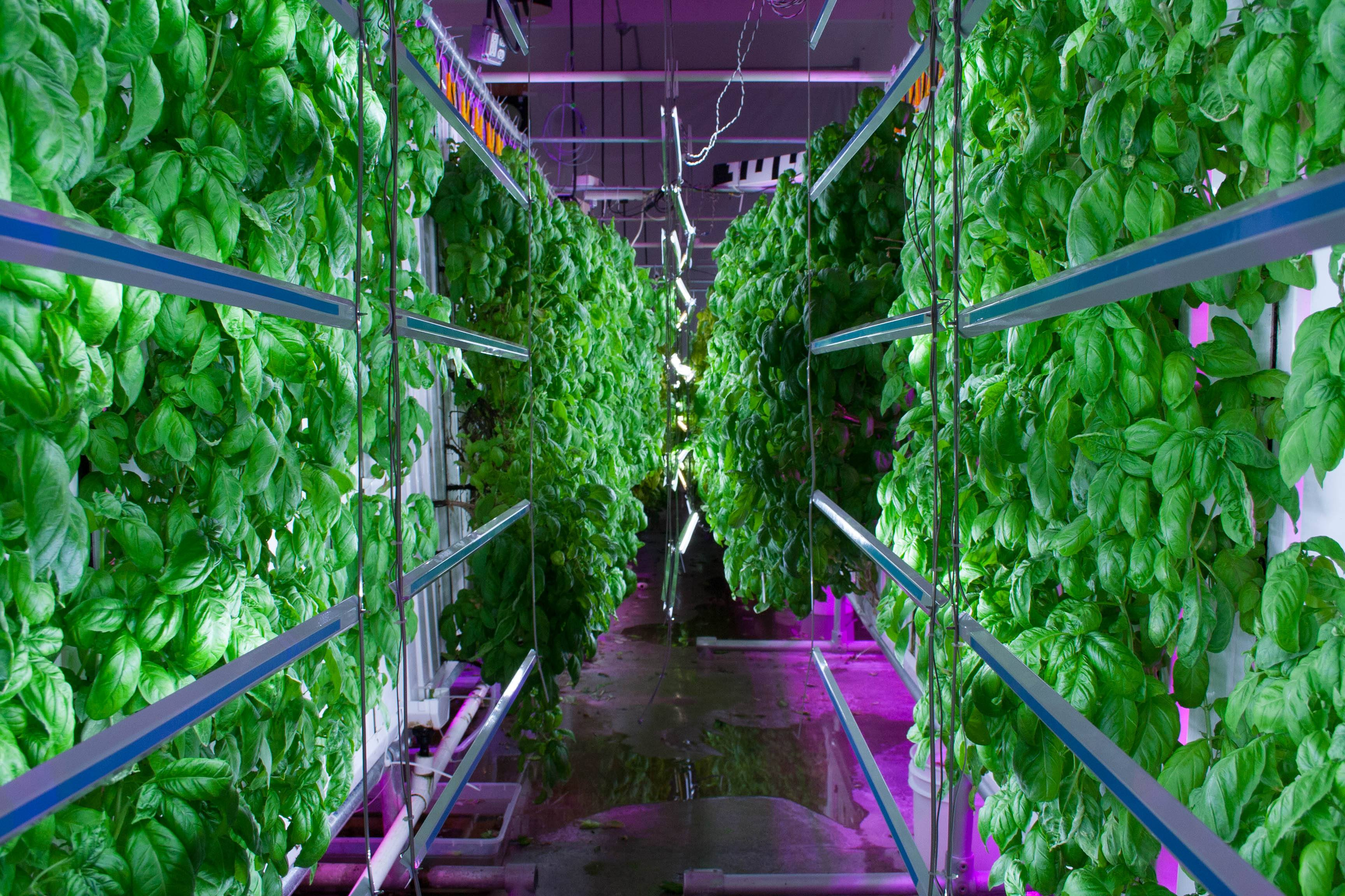 Growing a Brighter Future – Philips Lighting – Technology ...